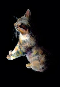 Barn Cat No. 1 - acrylic, watercolor and colored pencil on board