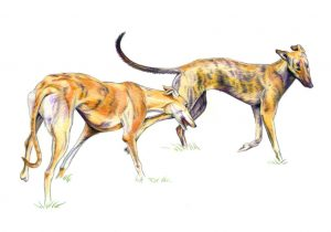 Hounds at Play - colored pencil